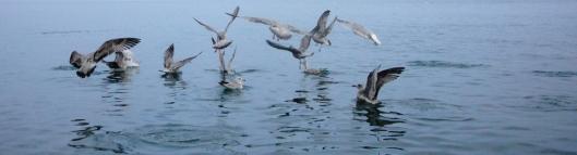 header-seagulls.jpg