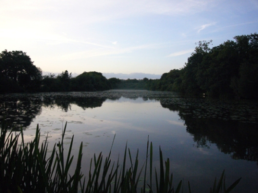 Sussex carp lake