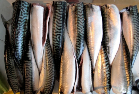 mackerel 2013