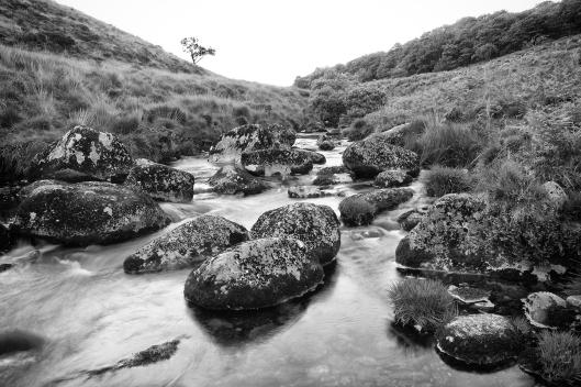 Dartmoor trout fishing