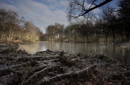 Lost pond - epping forest